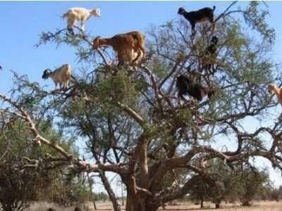 动物世界趣闻 动物世界里的十大神秘现象
